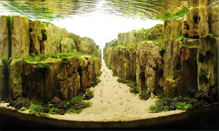 Примеры подводного ландшафтного дизайна «Aquascaping»
