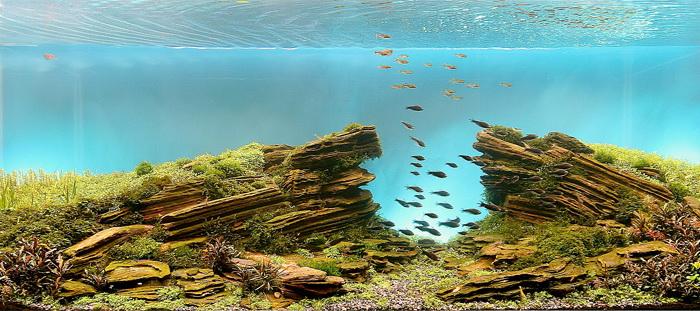 Ландшафтный дизайн под водой