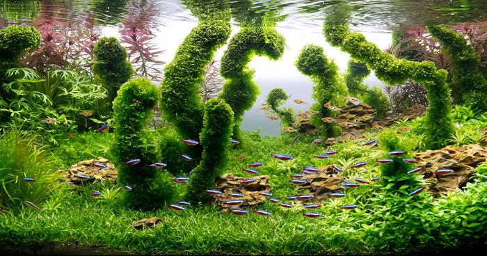 Подводный ландшафтный дизайн для рыб