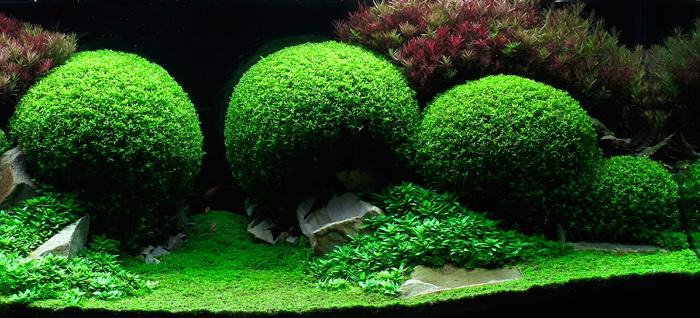 Лучшие примеры подводного ландшафтного дизайна Aquascaping