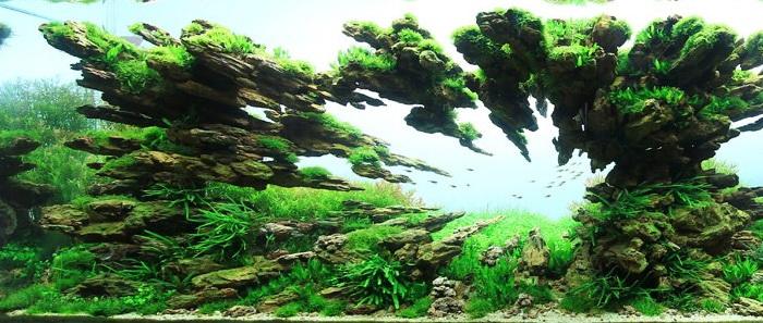 Подводный ландшафтный дизайн