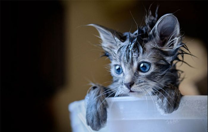 Ми-мишные котики.Фотограф: Viktoria Haack