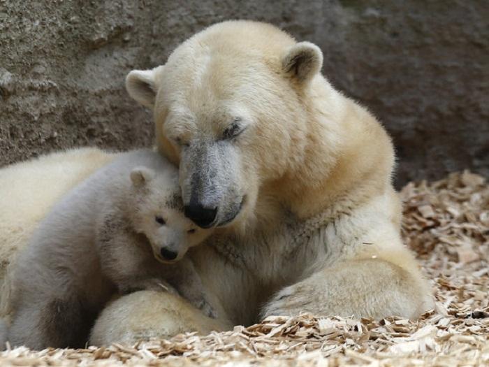 Медвежата с медведицей