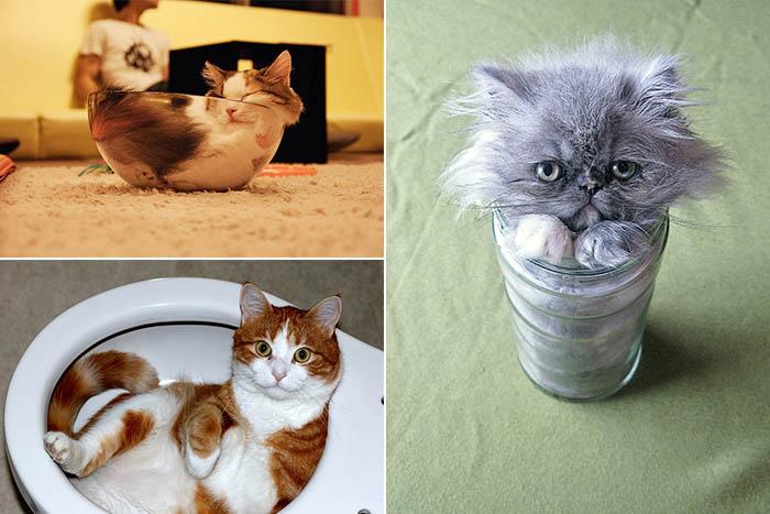 Жидкие кошки