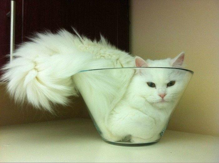 Салат из кошки