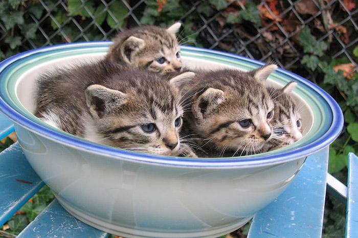 Большой салат из кошек