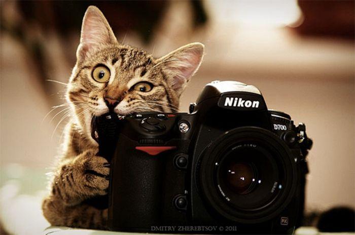 Ми-мишные котики.Фотограф: Dmitry Zherebtsov