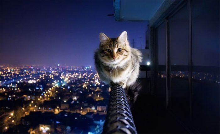 Ми-мишные котики.Фотограф: Crazy Ivory