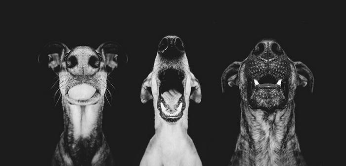 Фотографии собак от Elke Vogelsang