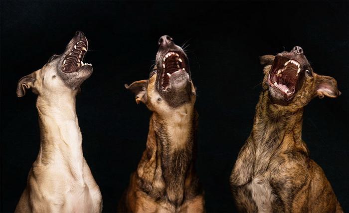 Смешные собаки от Elke Vogelsang