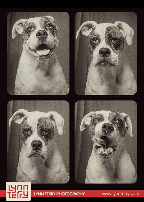 Оригинальная фотосессия собак