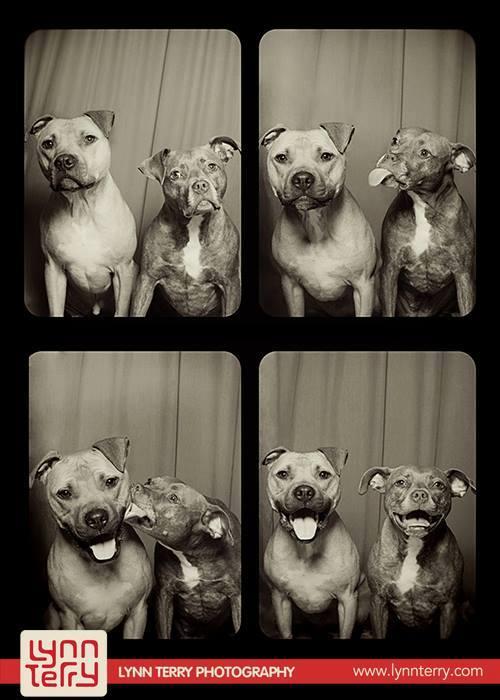 Собаки в фотокабине: оригинальные снимки домашних питомцев