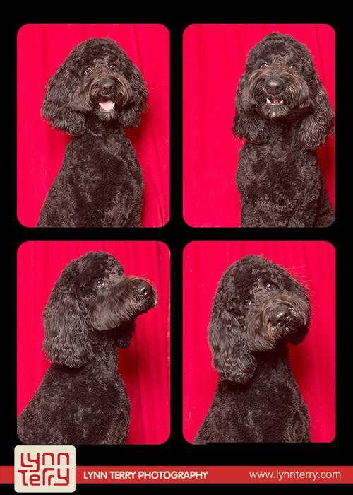 Собаки на фотографиях
