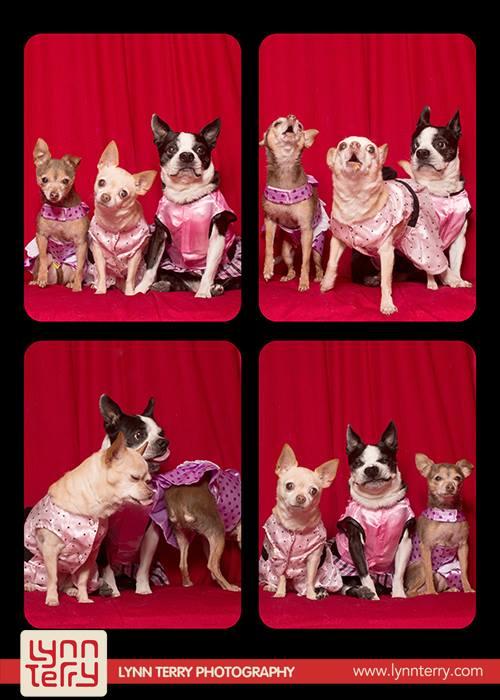 Снимки собак Lynn Terry