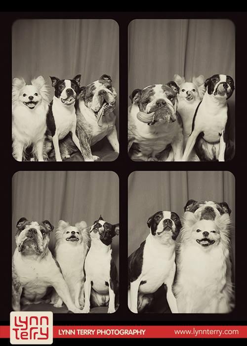 Снимки собак фотографа Lynn Terry