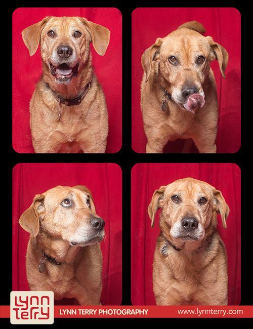 Собаки от Lynn Terry