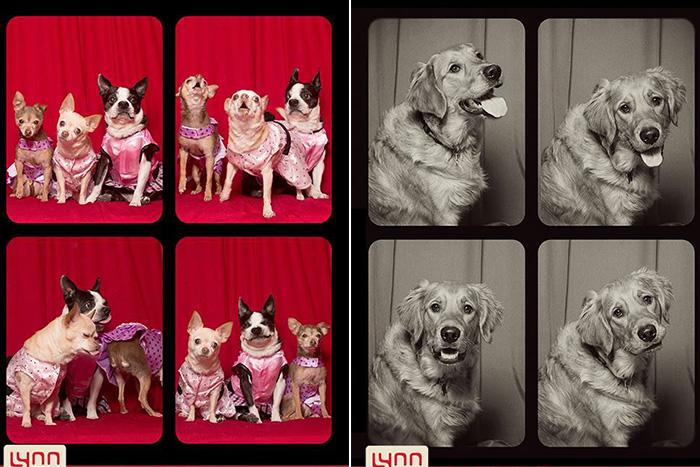 Собаки в фотокабине