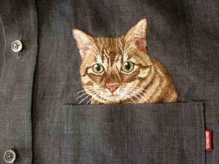Хироко Кубота: коты в кармане сорочки