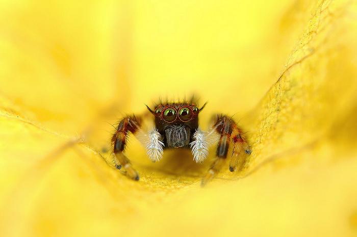 Уникальные макроснимки насекомых