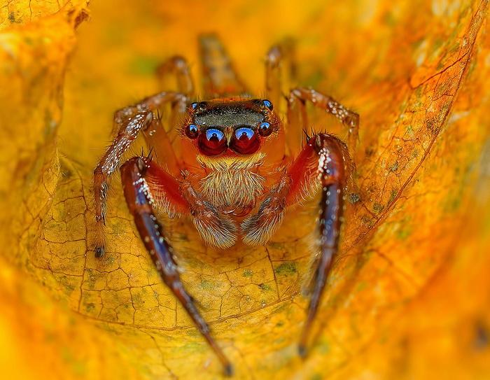 Уникальные макроснимки паучков от фотографа Jimmy Kong