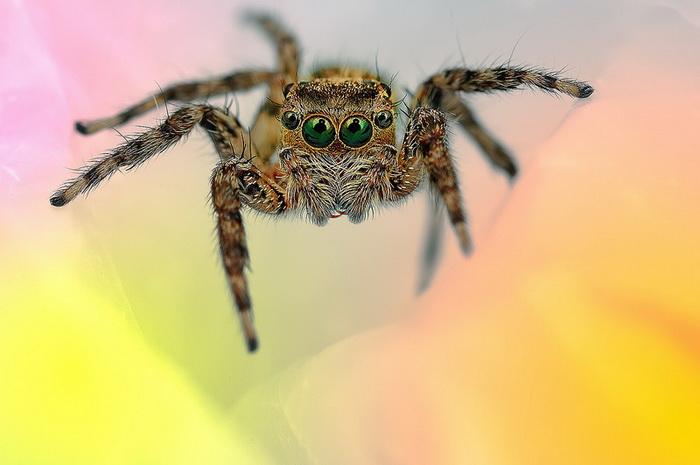 Уникальные макроснимки паучков