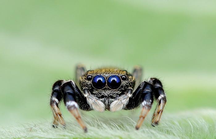 Удивительные паучки