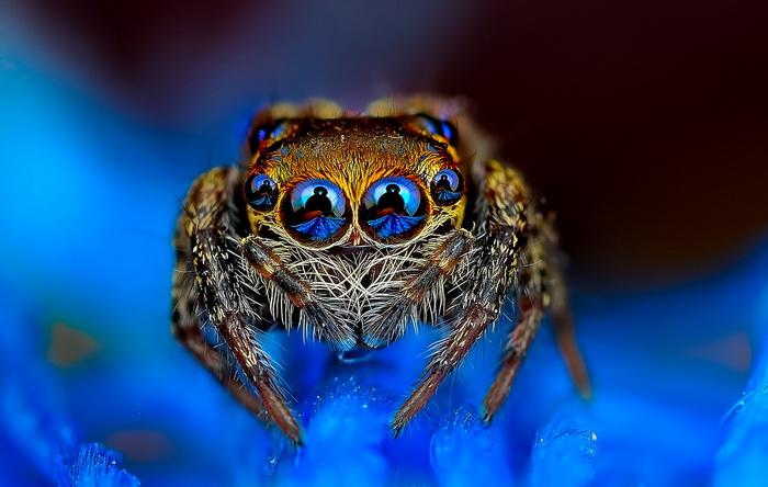 Макроснимки пауков