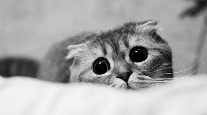Ми-мишные котики.Фотограф: Yana Zhavoronkova