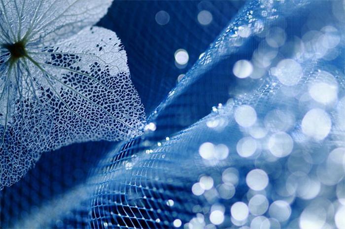 http://www.kulturologia.ru/files/u16342/flower_blue.jpg