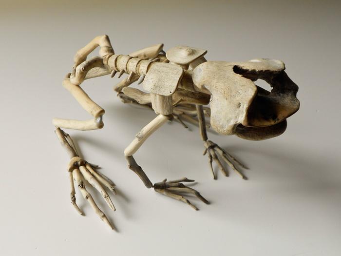 Коллекция Fragile Skeletons