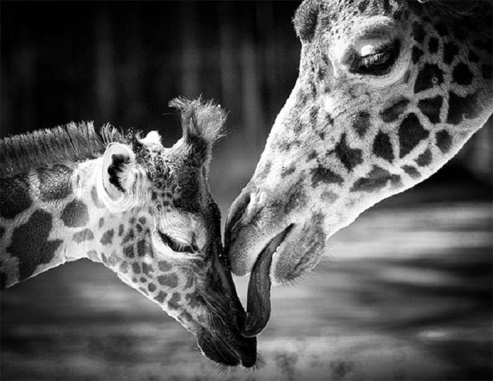 кисть лучшие черно белые фото животных тому же