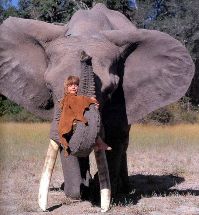 Tippi Degre на слоне