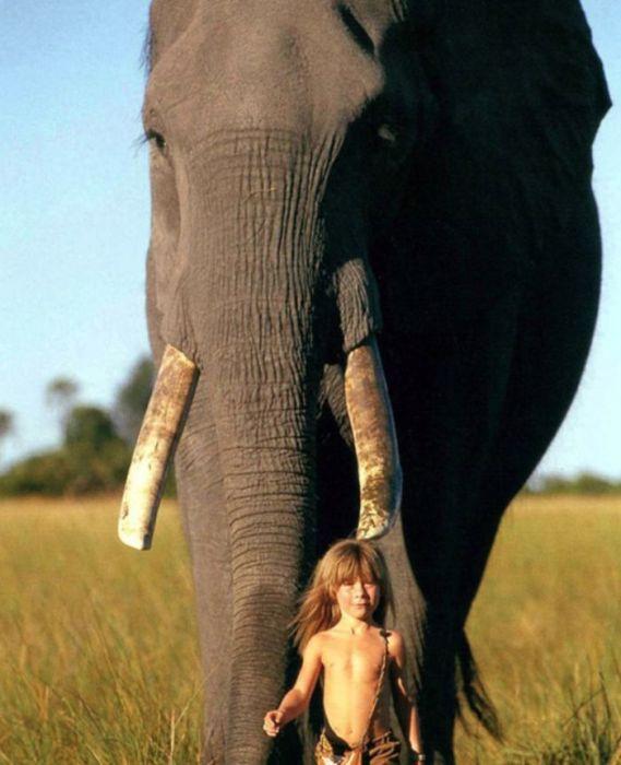 Tippi Degre и слон