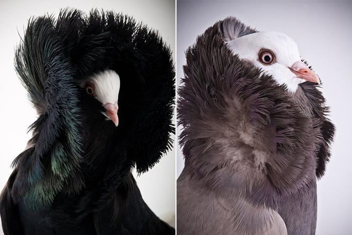 Фотосессия Darwin's Pigeons.