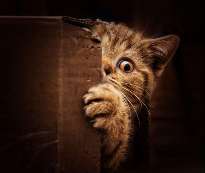 Фотосессия кошки в главной роли