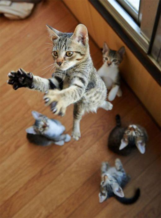 Ми-мишные котики.Фотограф: Akimasa Harada