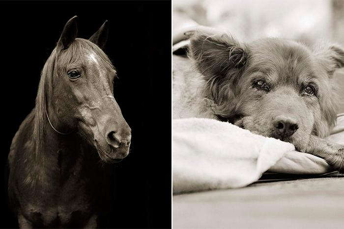 Животные в старости: фотопроект Isa Leshko