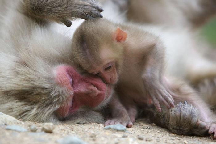 Материнский инстинкт в животном мире