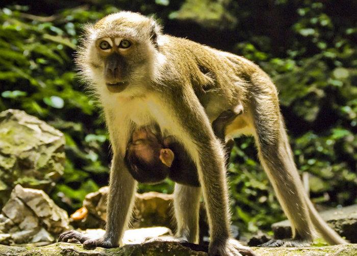 Материнский инстинкт у различных животных