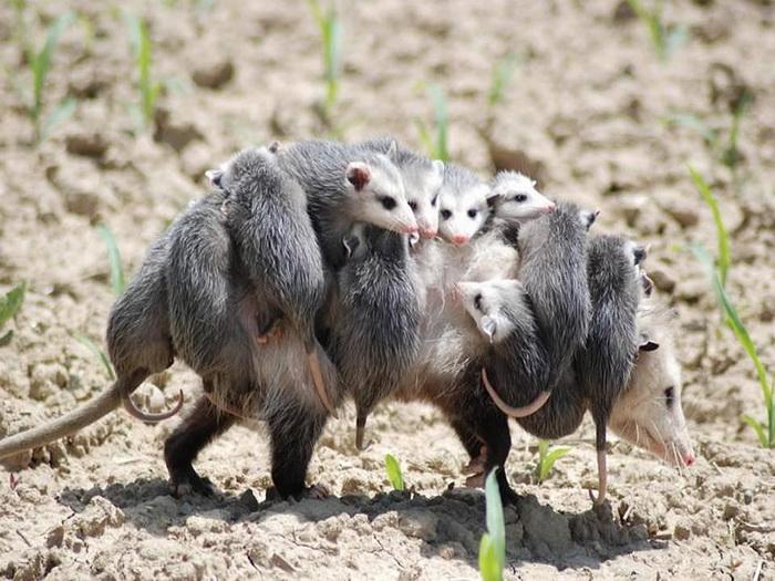 животные - мамы