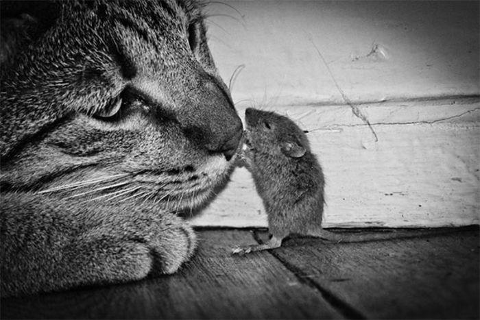 Ми-мишные котики. Фотограф:  Jeff Morgan