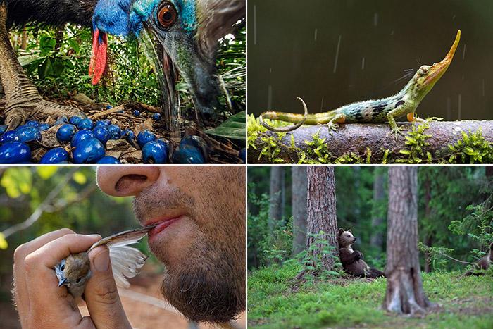 Самые знаковые фотографии животных и природы в 2013 году