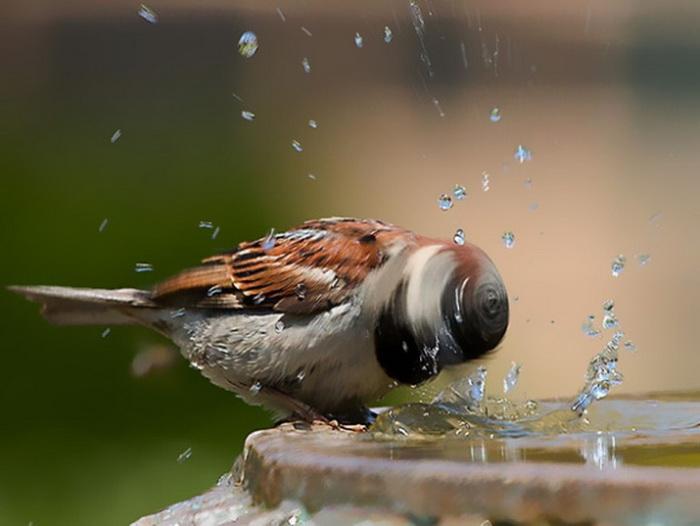 Красочные фотографии животных и птиц.