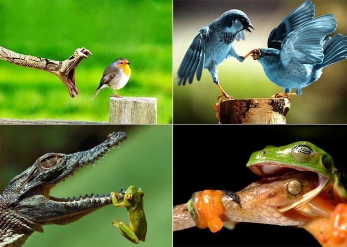 Фотографии животного мира.