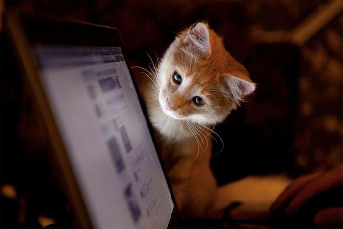 Ми-мишные котики. Cheglakov Eugene