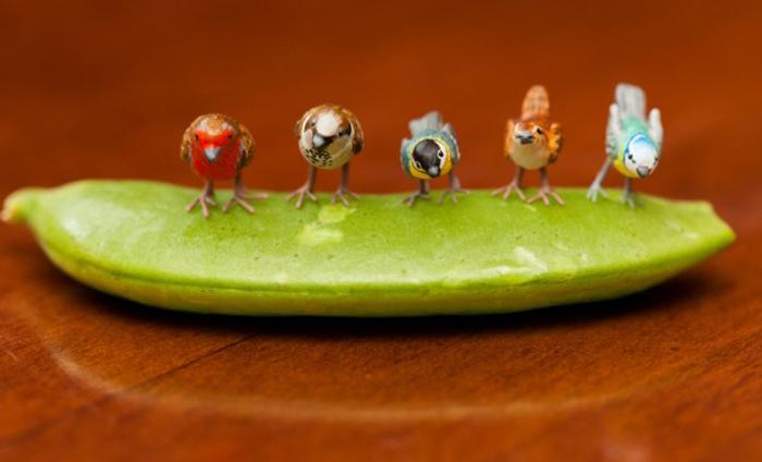 Sadie Campbell: крошечные животные, птицы и насекомые