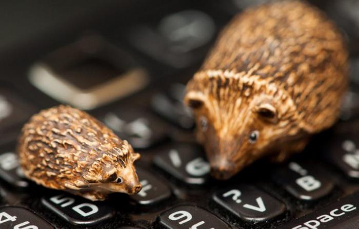 Крошечные фигурки животных от Sadie Campbell