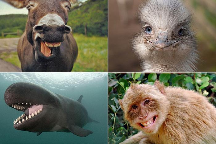 смеющиеся животные в кадре