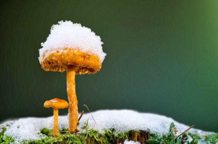 Зимние грибы