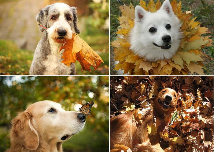Осенняя фотосессия с собаками